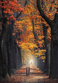 Seasons stroll by Rob Visser