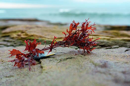 Seaweed by Su Buehler