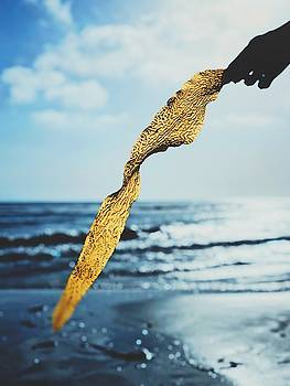 Seaweed by Traci Ling