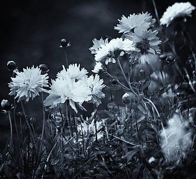 Secret Black and White Garden by Jeff Townsend