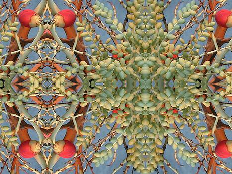 Seeds by Dan Simpson