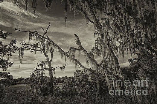 Dale Powell - Sepia Spanish Moss Factory