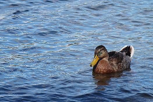 Serene Duck by Gustave Granroth