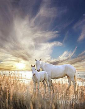 Serene Sunset by Melinda Hughes-Berland