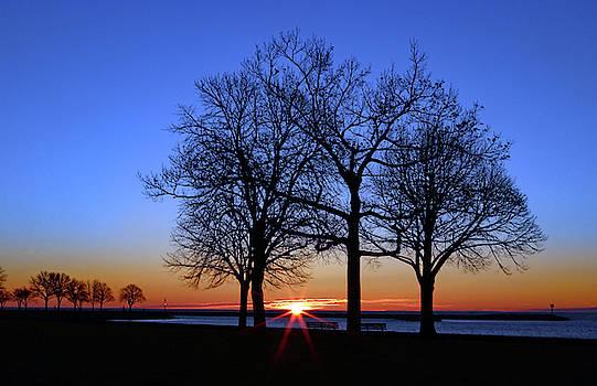 Serenity by Steve Bell