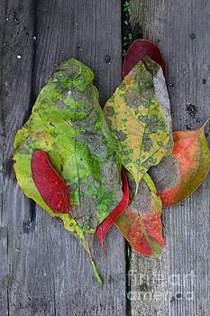 Shades and Textures of Autumn by Anne Ditmars
