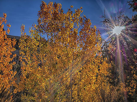 Shades of Yellow by Michele James