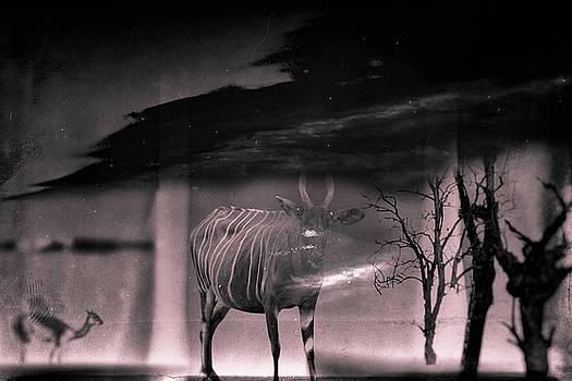 Shadowlands by Rabiri Us