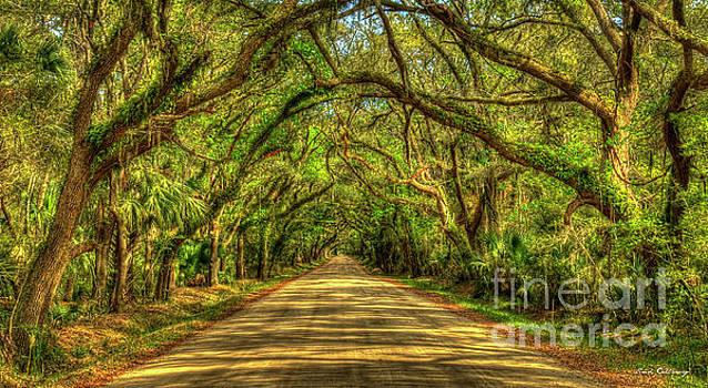 Charleston S C Shadows On Edisto Island Botany Bay Road South Carolina Landscape Art by Reid Callaway