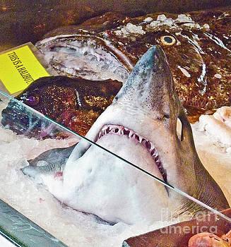 Shark Berg_350 by Howard Stapleton