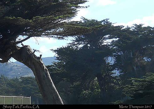 Sharp Park Cypress Trees by Marte Thompson