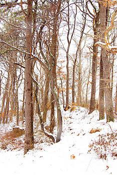 Shawme Snowfall 2 by Sharon Mayhak