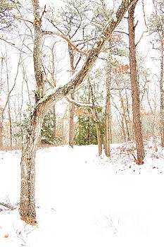 Shawme Snowfall 3 by Sharon Mayhak