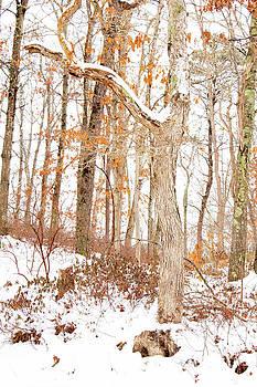 Shawme Snowfall by Sharon Mayhak