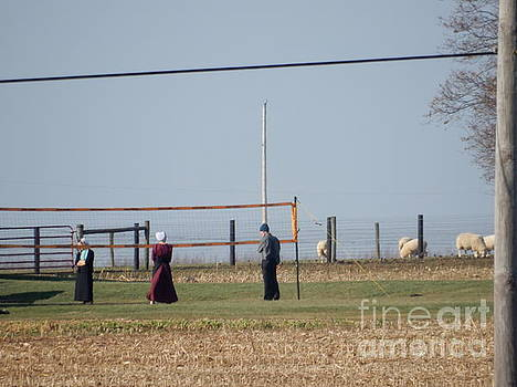 Christine Clark - Sheep Graze During a Volleyball Game