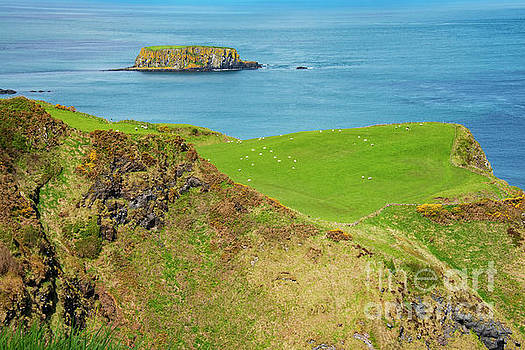 Bob Phillips - Sheep Island on Causeway Coast