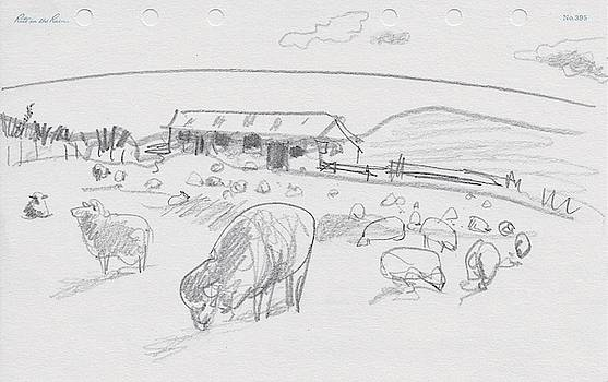 Sheep on Chatham Island, New Zealand by Abby McBride