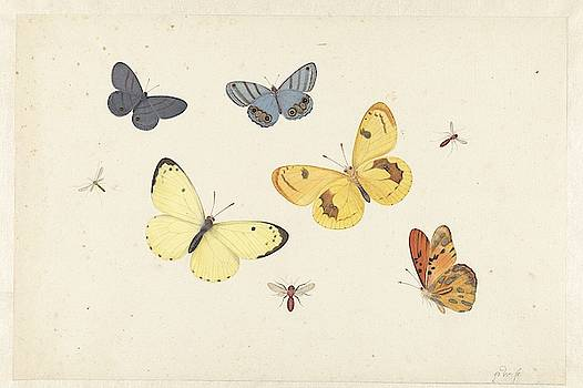 Sheet of Studies with Five Butterflies by MotionAge Designs