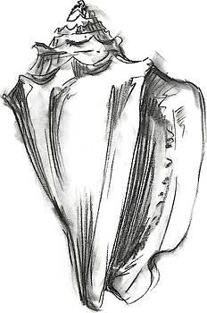 Shell Sketch I Wall Art by Ethan Harper