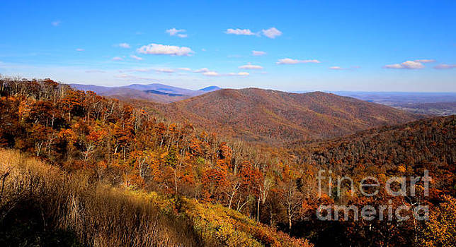 Shenandoah Vista Looking Eastward In Autumn's Golden Hour by SCB Captures