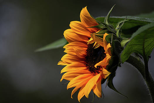 Shine by Tim Beebe