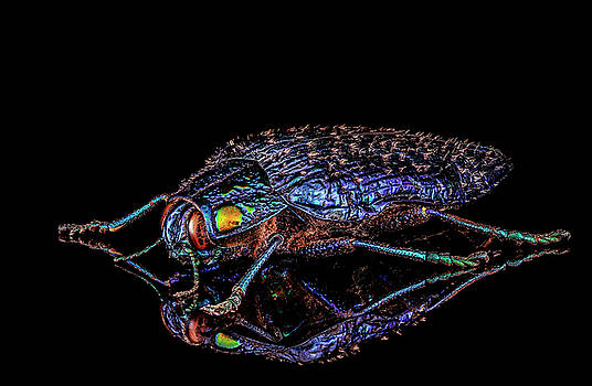Shiny Metallic Blue Beetle by Gary Shepard