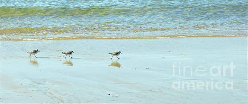 Sharon Williams Eng - Shore Birds Marching