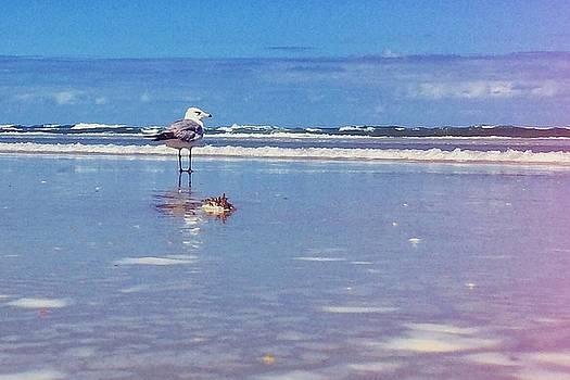 Shorebird on the Beach by Scott Gunnerson