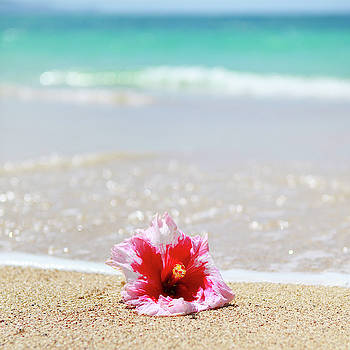 Shoreline Hibiscus by Angelina Hills