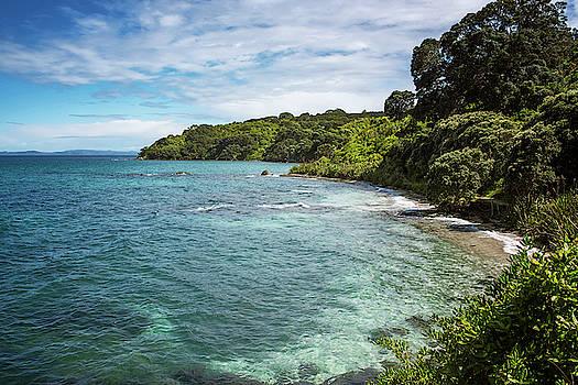 Shoreline of Tiritiri Matangi New Zealand by Joan Carroll