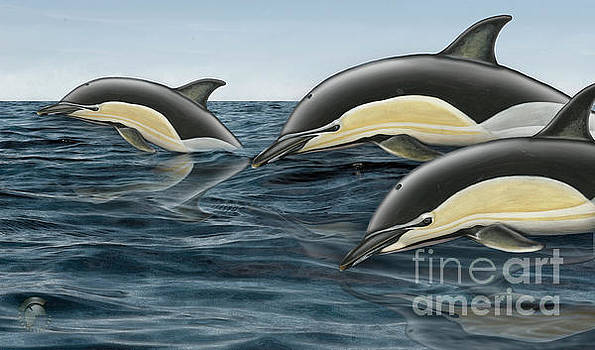 Short-Beaked Common Dolphin - Delphinus delphis - Gemeiner Delfin - FineArt Print-Stock Illustration by Urft Valley Art