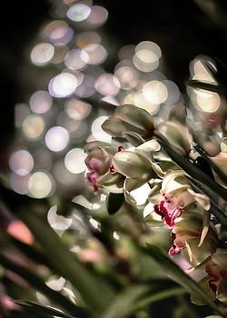 Showering Orchid by Scott Wyatt