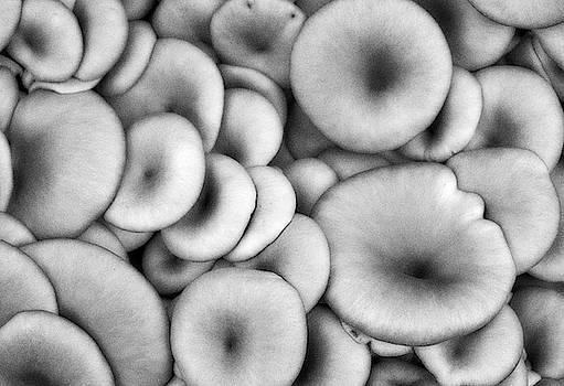 Shrooms by Tom Vaughan