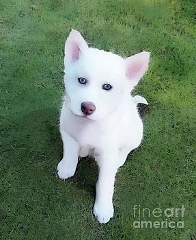 Siberian Husky Puppy A030619 by Mas Art Studio