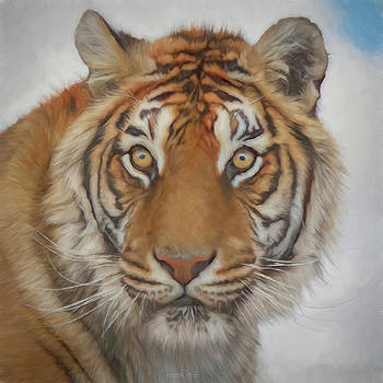 Siberian Tiger Portrait by TL Wilson Photography by Teresa Wilson