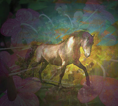 Sibu The Magical Wild Stallion by Patricia Keller