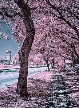 Sidewalk on Holcombe Infrared by Norman Gabitzsch