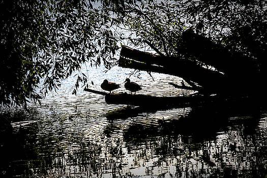 Silhouette Ducks #h9 by Leif Sohlman
