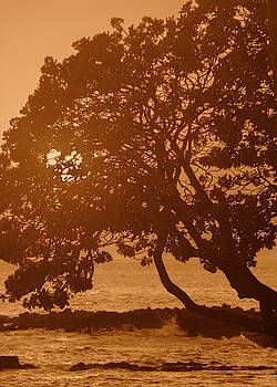 Silhouette of a Tree by Alina Oswald
