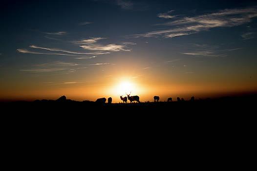 Silhouette of Tule Elk by Khalid Mahmoud