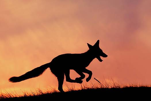 Silhouette series - Happy Fox by Roeselien Raimond