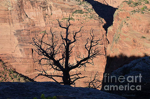 Silhouette Tree Against Canyon De Chelly Cliff Wall by Debby Pueschel