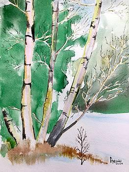 Silver Birch In Snow by Ahonu