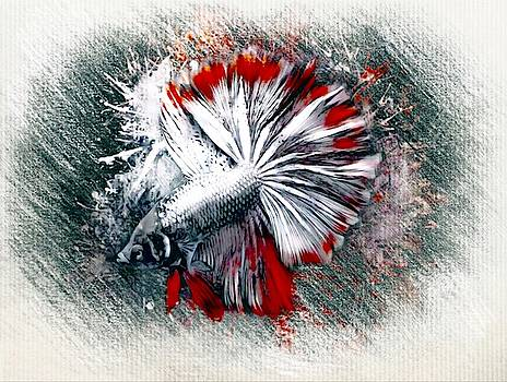 Silver Red Rosetail  Betta Color Sketch  by Scott Wallace Digital Designs