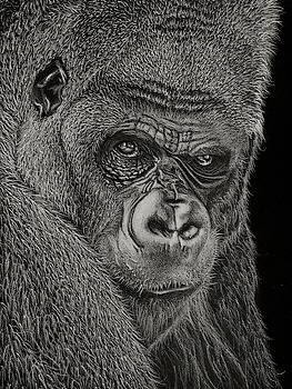 Silverback by Jeff Burcher