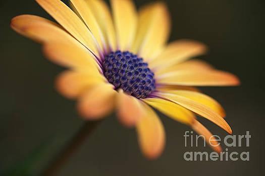 Simply Beautiful In Yellow To Orange  by Joy Watson