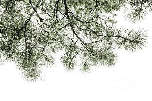Simply Spruce 2 by Priska Wettstein