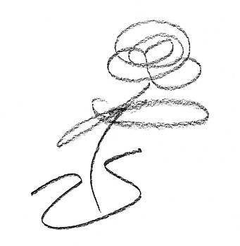 Single flower in vase pencil sketch by Steve Clarke