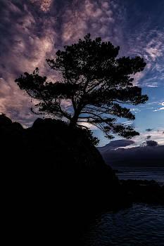 Werner Kaffl - Single Tree