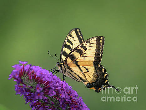 Sipping nectar by Claudia M Photography